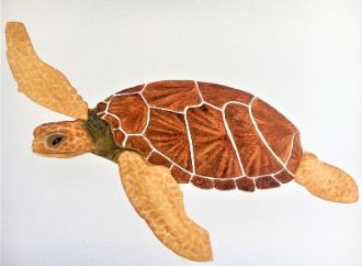 turtle majjistral park