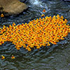 Rubber ducks in the ocean