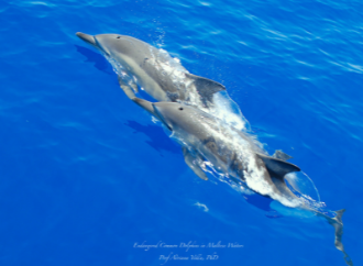 dolphins sea marvel