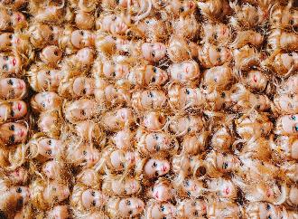 Dolls's faces