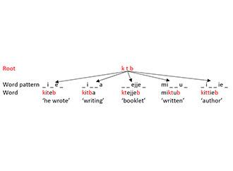 Root - word - pattern