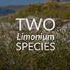 twolimoniumspecies