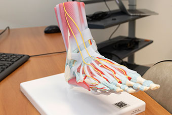 Examining the foot