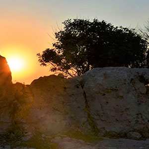 The sun, rocks and a tree
