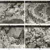 limestone globigerina