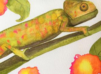chameleon majjistral