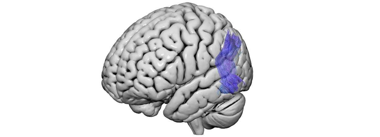 Exploring the neural architecture that scaffolds consciousness