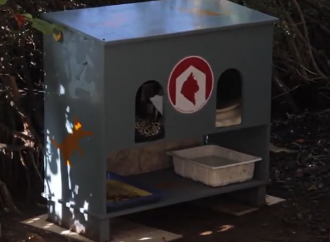Cat feeders campaign