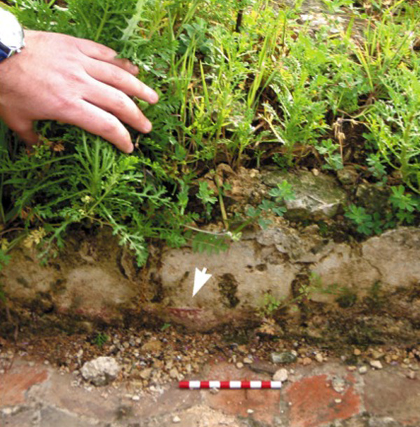 Vegetation growing in the space between wall face and dislodged plaster layer, scale bar 10 cm