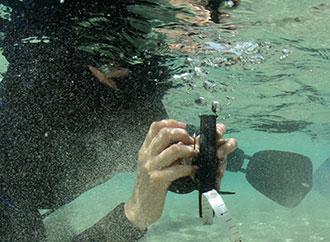 Researcher underwater