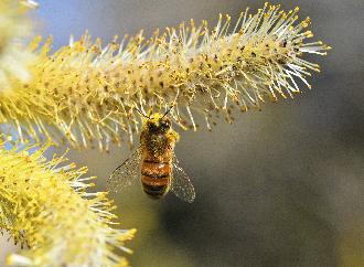 Bee near plant