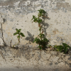 greener spaces