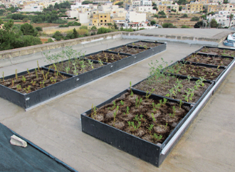 green roof UM